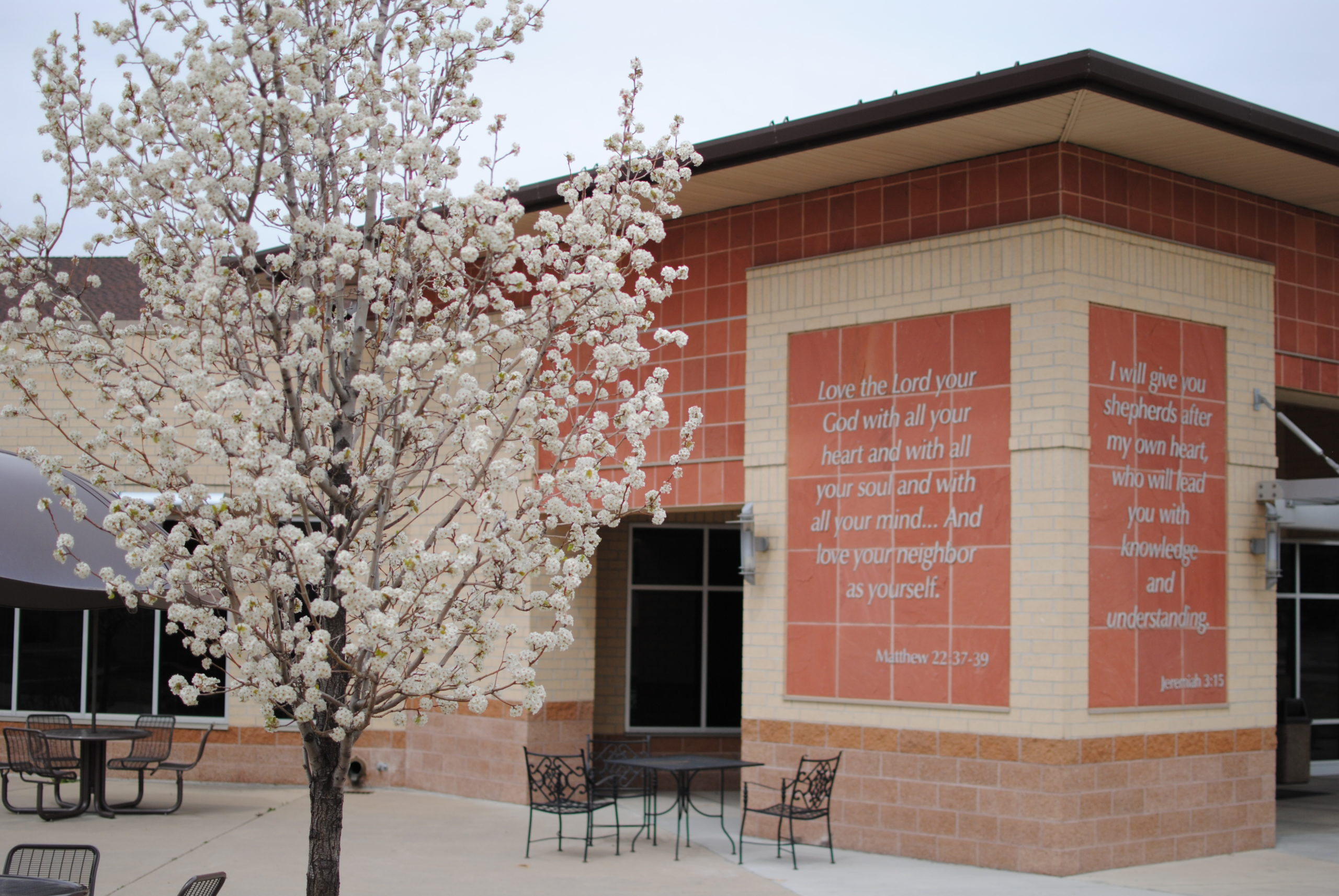 Exterior building on campus with a spring tree in bloom